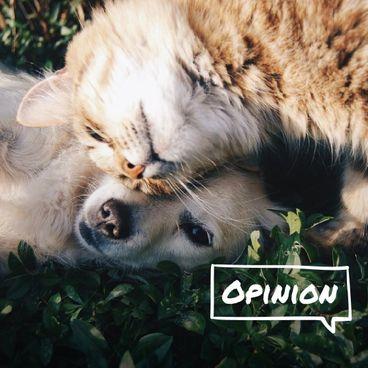 """Bàn về chuyện """"nhân đạo"""" với động vật"""