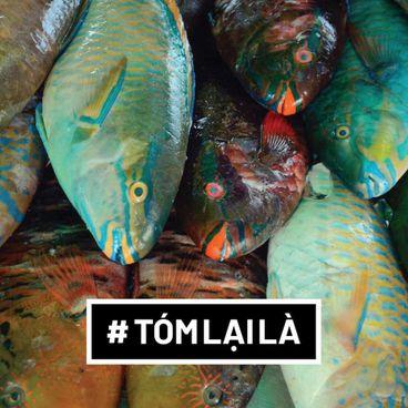 Tóm Lại Là: Tragedy of the commons là gì? Vì sao không nên ăn cá vẹt?