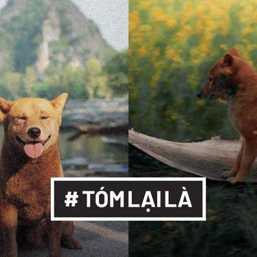 Tóm Lại Là: Khi động vật làm diễn viên