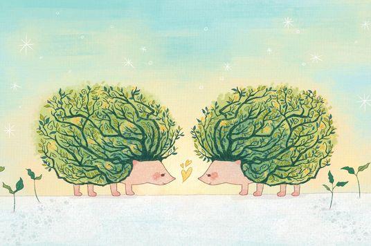 Tình huống khó xử của loài nhím: Khi khoảng cách khiến chúng ta gần nhau hơn