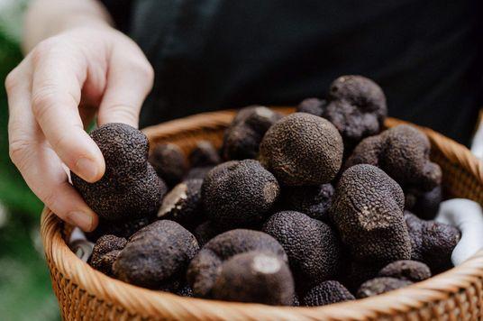 Chiêm ngưỡng 'Kim cương đen của giới ẩm thực' tại Jardin Des Sens Saigon