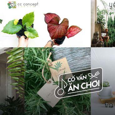 5 Tiệm cây quanh Sài Gòn cho dân chơi hệ thiên nhiên