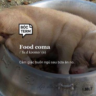 Bóc Term: Food coma là gì? Ăn no, đi ngủ là điều hiển nhiên?