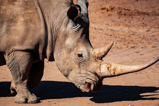"""""""Sau này con lớn, con muốn bảo vệ những chú tê giác."""""""