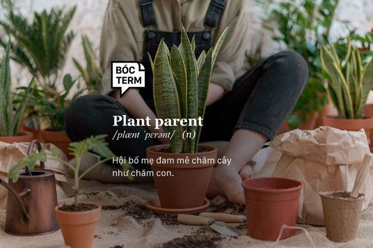 Bóc Term: Plant parent - Hội những người chăm cây như em bé