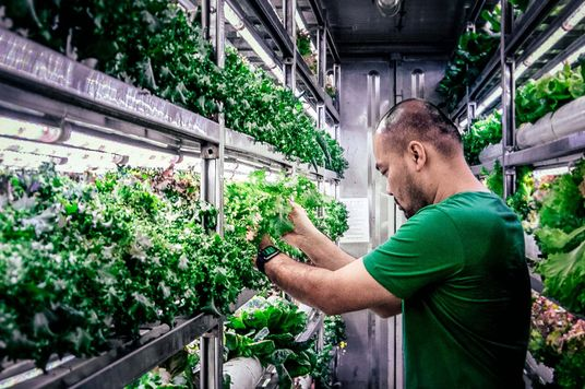 Indoor Farming In Vietnam: From Shipping Container To Consumer