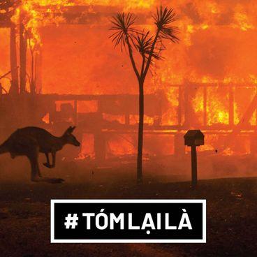 Tóm Lại Là: Tại sao rừng ở Úc cháy?